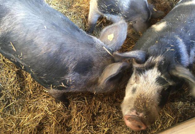 Förutom att grisar ska kunna röra sig fritt, vill man lägga till krav kring palmolja och GMO.