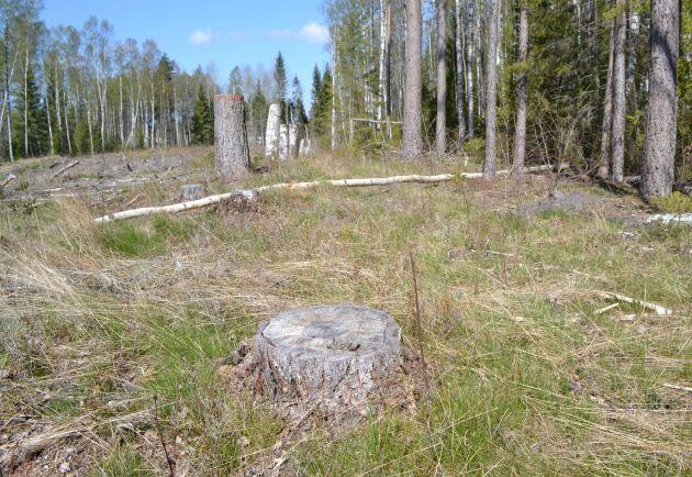 På flera ställen sitter snitslingen fel enligt fastighetskartan, på andra ställen har träd avverkats utanför snitslingen.