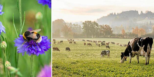 Forskare: 10 skäl att skydda gräsmarker