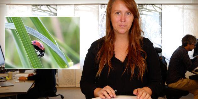 ATL TV: Så kan lantbruket gynna insekter