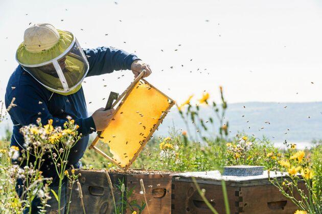 Honung är inte bara nyttigt, det är supergott också!
