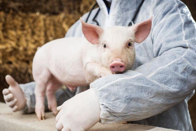 Antibiotikaanvändningen inom EU stramas upp rejält, men även länder som vill exportera kött till EU måste förhålla sig till reglerna.