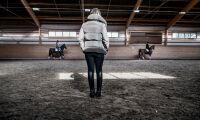 Riksdagen vill utreda hästutbildning