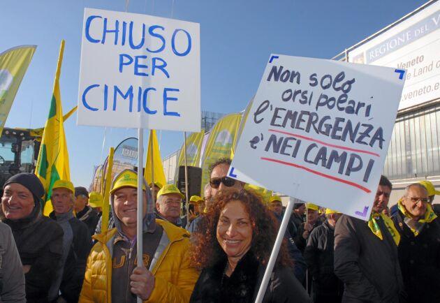 Antonio Ricci och hans sambo Cristina har förlorat hela sin päronskörd.