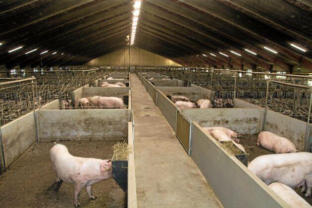 Det nuvarande suggstallet på Tandergård byggdes 2008–2009 och har plats för ungefär 1 000 djur. Gyltämnen föds upp i ett äldre stall på gården.