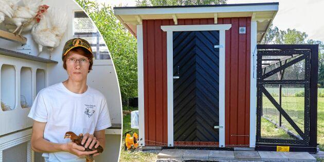 Teodor, 17, bygger hönshus med extra allt – kika in i smarta bygget!