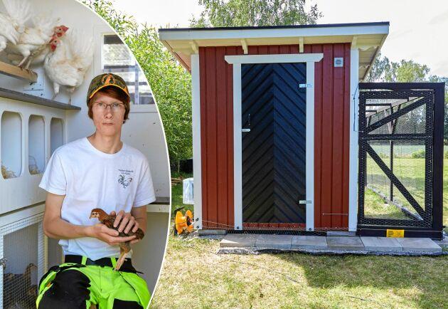 Teodor Wilsson visar sitt hönshusbygge, fullt med smarta hönslösningar.