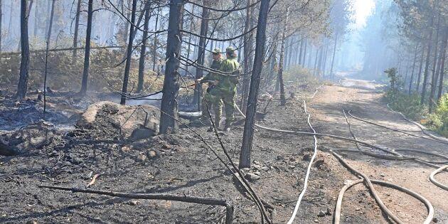 Våg av anlagda bränder drabbar skogsägare