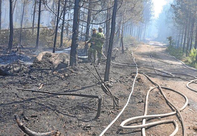 Två män häktades under tisdagen på sannolika skäl misstänkta för att ha anlagt en serie skogsbränder i Gislaveds och Värnamotrakten. Denna genrebild är dock inte tagen vid någon av brandplatserna.