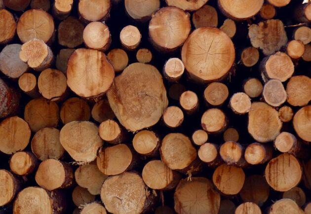 Skogsmaskinföretaget Cintoc har fått EU-bidrag för att utveckla en metod att göra biomassa av klena träd.