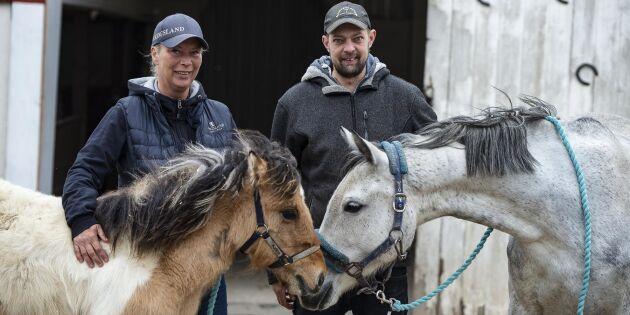 Satsar på avel för att möta bristen på ridskolehästar