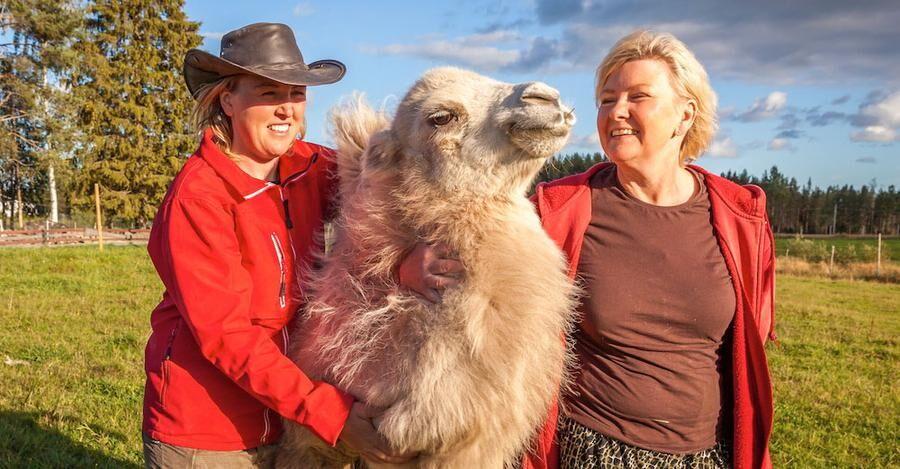 Linda och Ann-Christin, kramar om sin kamel Ämbla, som förra året fick ett föl - Nova.
