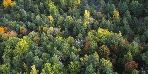 Förslag: Skogen skannas för 12 miljoner årligen