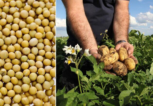 Snabbmatskunderna vill ha allt mer vego, men svenska råvaror som gula ärtor och potatis finns inte på menyn.