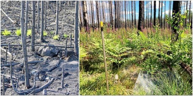Brandkatastrofen gav lyft för naturen