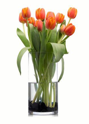 Rak vas och raka blommor, som tulpanerna växer i naturen.