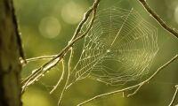 Spindelväv och trä ska kunna ersätta plast