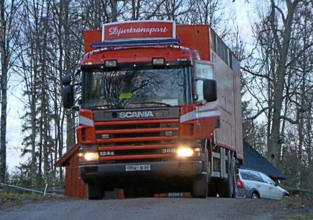 Skärmdump på Djurambulansens transport med körförbud från programmet Djurskyddarna i TV4.