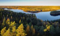 """Grundlagsvidrigt konfiskera skog utan ersättning"""