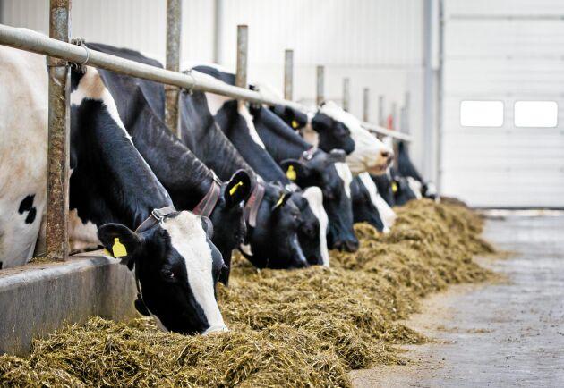 Tidigare har storleksrationaliseringar vägt upp för färre mjölkföretag och mjölkkor, men nu täcker det inte längre upp för minskningen i den totala mjölkinvägningen.