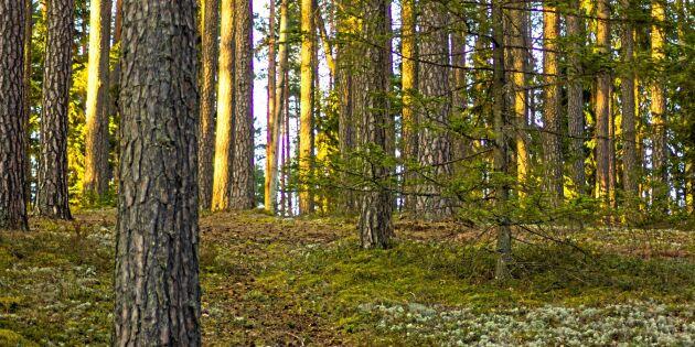 SCA köper mer skog i Baltikum