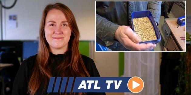 ATL TV: Hett med havre