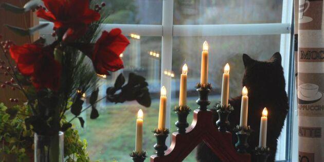 RÖSTA: När är det okej att ta fram julsakerna?