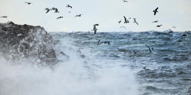 Stormen Alfrida orsakar skador på Gotland