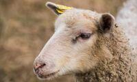 Bonde misstänks för djurplågeri