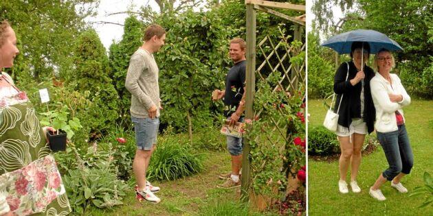 Öppen trädgård: Rosor och regn på Öland