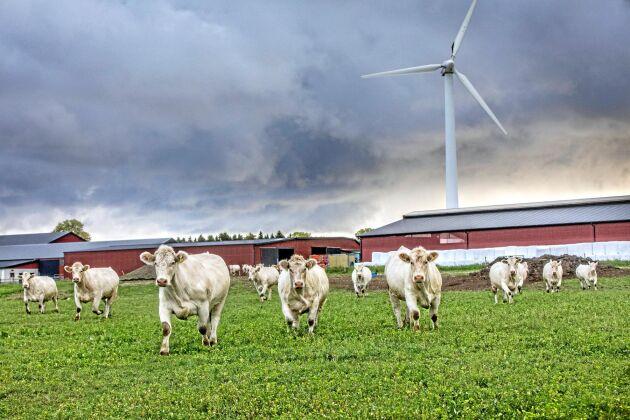 Hägvards gård är klimatcertifierad och byggde sitt första vindkraftverk för 25 år sedan. Nu ska verksamheten bli helt fossilfri.