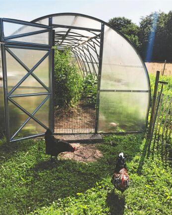 Många tunnelväxthus blir hönshus under vintern. Sprättat och klart för odling till våren i en tunnel från Grohus.
