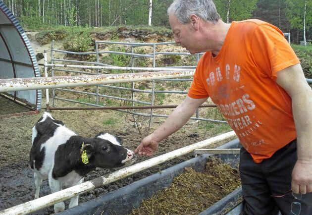 Mats Karlsson i Heden utanför Boden är i full produktion igen efter takraset som förra året dödade 50 av hans kor.