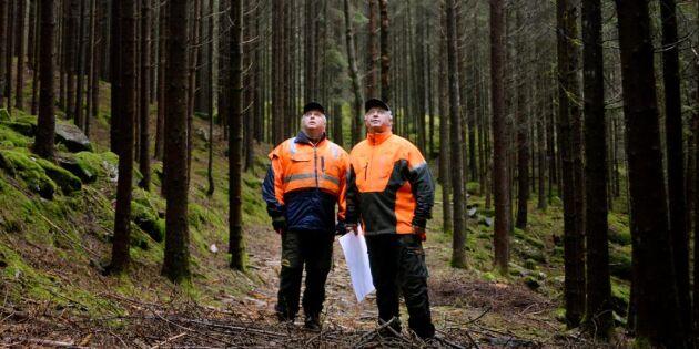 Få ingrepp i skogen en kassako för bröderna
