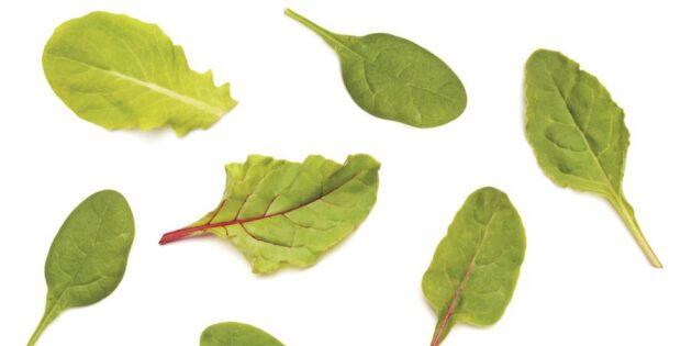 Nya rön: Därför ska du äta mer bladgrönsaker varje dag!