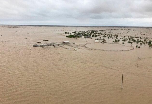 Kylie och Ronald Cook på boskapsfarmen Channel Downs förlorade 340 av sina 350 nötdjur i ovädret i Queensland i januari 2019.