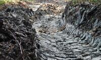Efter meterdjupa skogsdiken - Holmen kritiseras