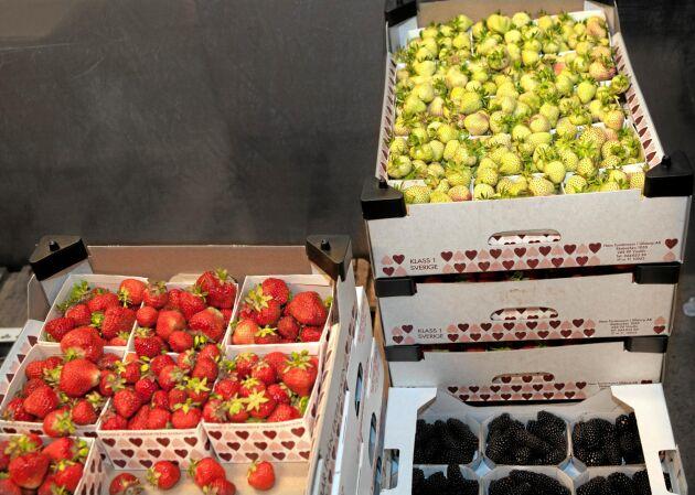 Det är populärt att servera omogna jordgubbar i sommar.