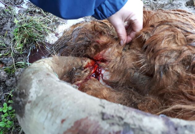 Ägaren har enligt Förvaltningsrätten allvarligt försummat tillsynen av sitt djur.