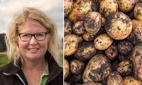 Potatis är framtiden –men inte till vilket pris som helst