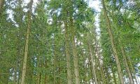 Lättnad bland skogsfolk efter EU-omröstning