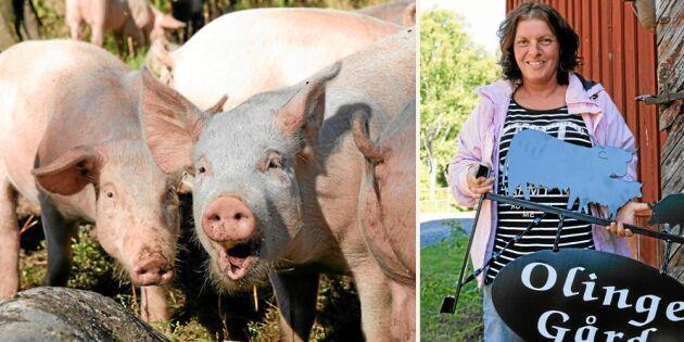 Olinge gård: Här får grisarna ströva fritt