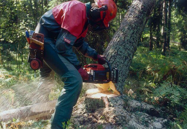 Skogens betydelse för landsbygdens jobb går inte att underskatta, anser Kristdemokraterna.
