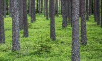 Sveaskog visar sina inventeringar på nätet