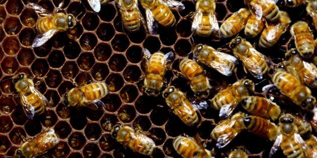"""""""Rätt använda neonikotinoider skadar inte bin"""""""