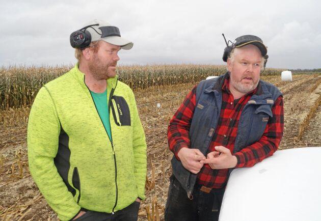 Rickard Åberg och Roger Åberg skördar majs i rundbal.
