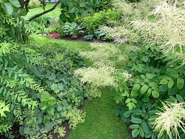 Plymspirea och daggkåpa bildar en mjuk svängdörr in emot nästa rum i trädgården.